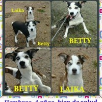 Foto de Betty Y Laika
